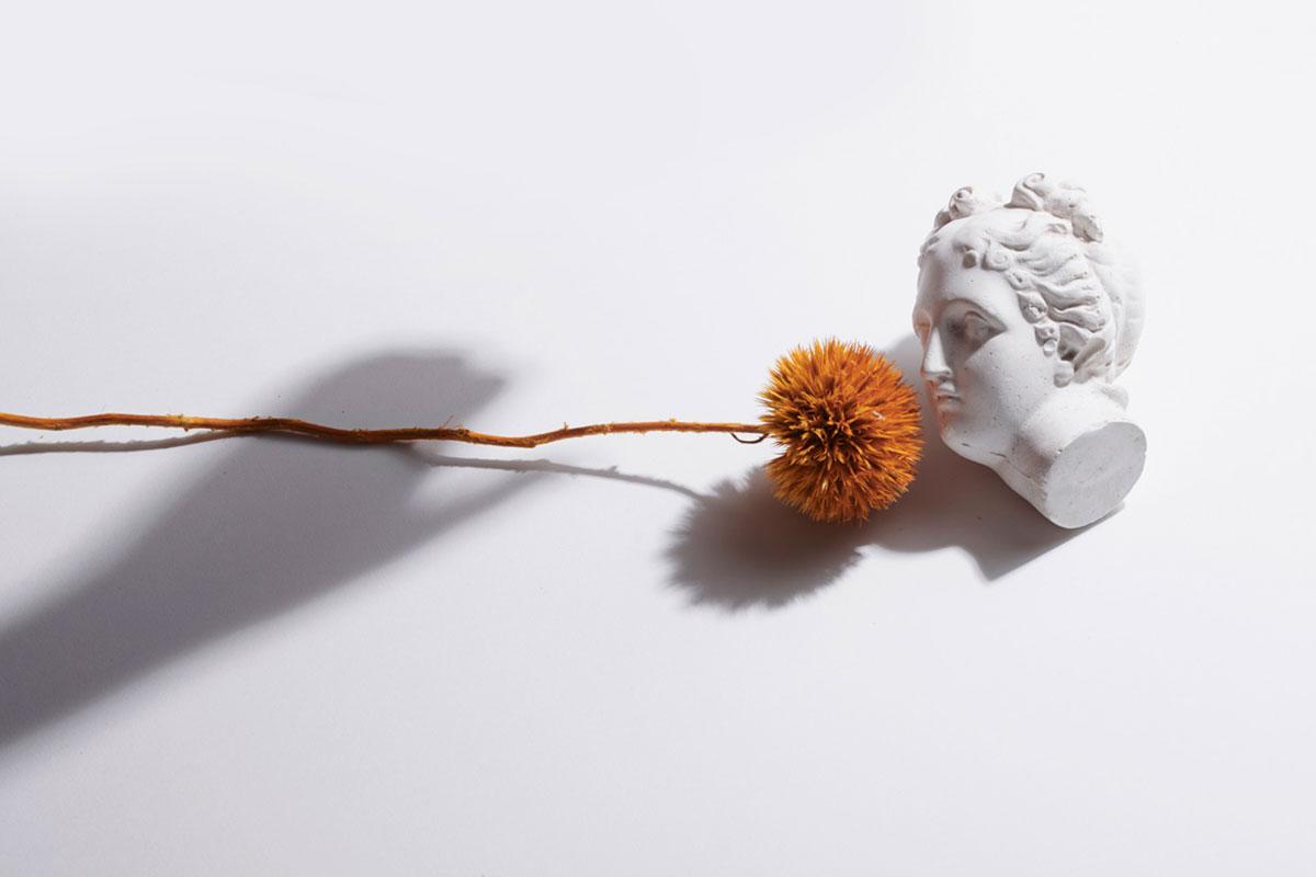 ARI_art_recherche_industrie_fleurs_preservees_10